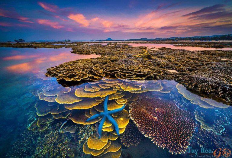 Du lịch đảo Hòn Yến thời điểm nào đẹp nhất?