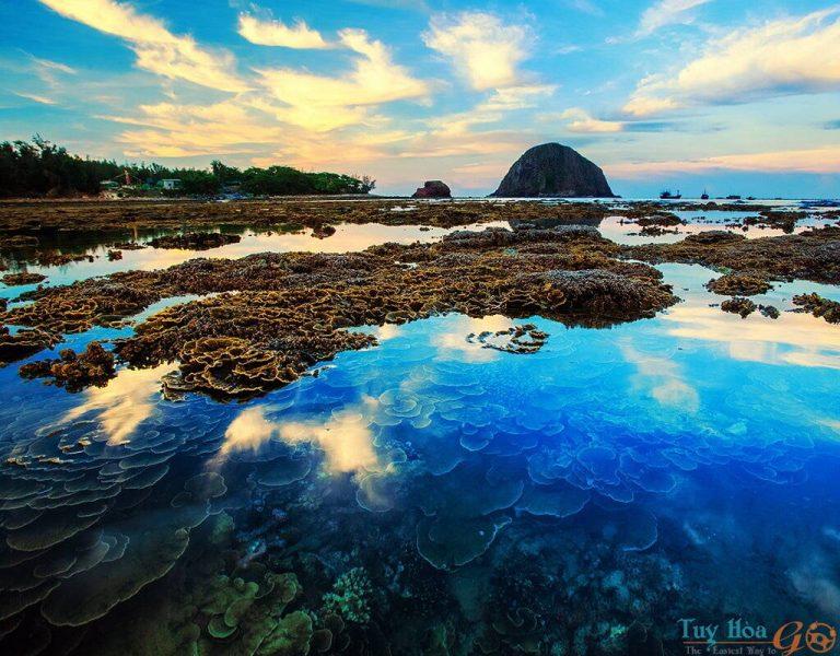 Ngắm san hô trên cạn