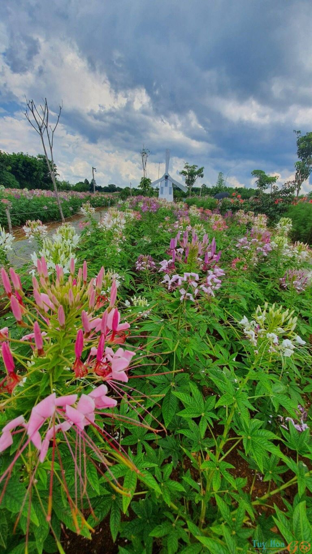 Vườn hoa Long Vân Garden