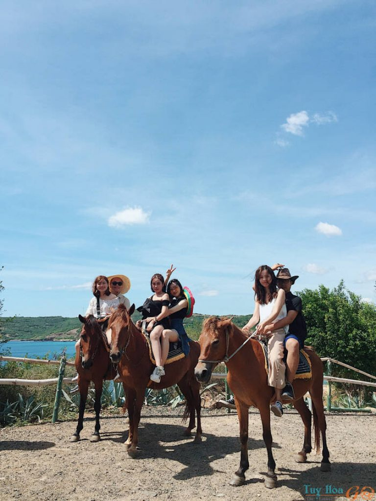 Chụp ảnh cùng ngựa đua