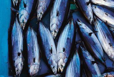 Học lỏm bí kíp chọn cá ngừ đại dương nguyên con chuyên nghiệp
