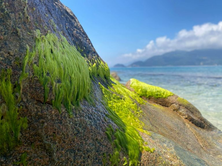 Đi dạo quanh và chụp ảnh sống ảo trên đảo Hòn Nưa