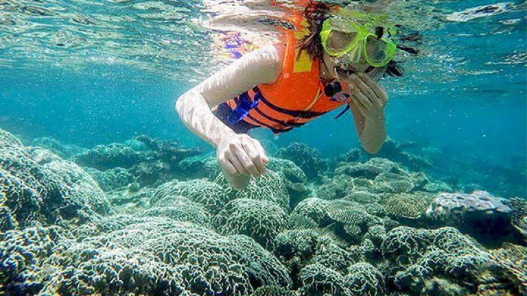 Lặn ngắm san hô và cá biển trên đảo Hòn Chùa