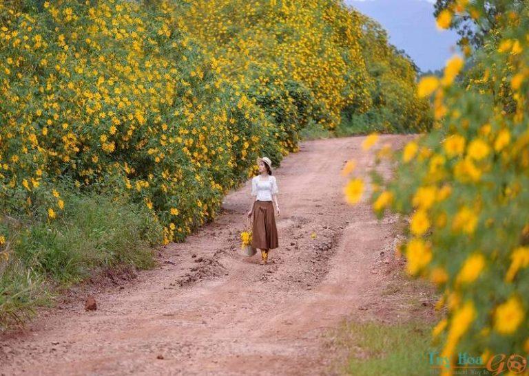 Tổng hợp kinh nghiệm du lịch Đà Lạt – chốn mộng mơ cuốn hút